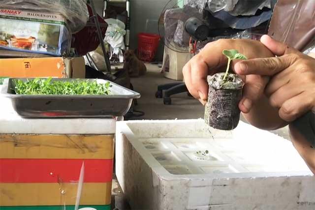 om hạt trồng rau thủy canh bằng viên nén