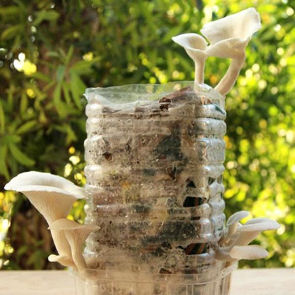 Cách trồng nấm tại nhà