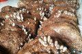 Cách trồng nấm rơm bằng mùn cưa