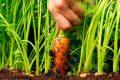 Cách trồng cà rốt tại nhà