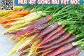Cách trồng cà rốt mini