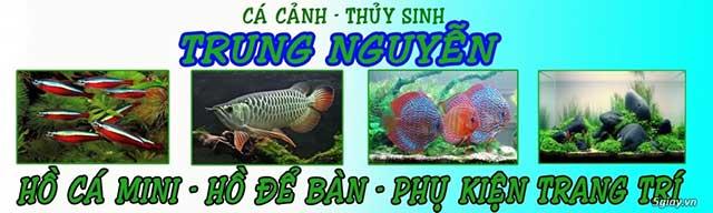 Cửa hàng cá cảnh Trung Nguyễn
